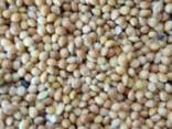 Millet yellow, red - фото 1