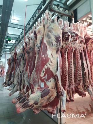 Мясо Баранина Говядина оптом